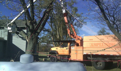 Storm Damge Tree Removal