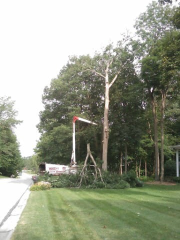 Hazardous Oak Tree Removal