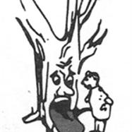 Tree health diagnosis is my tree sick?