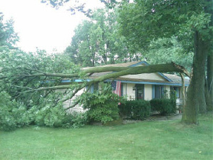 Storm Damage to Trees