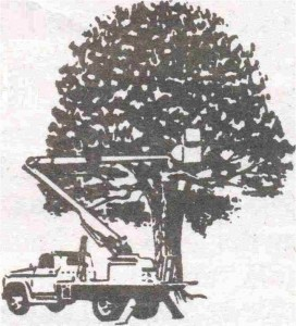Tree Removal in the Fort Wayne area