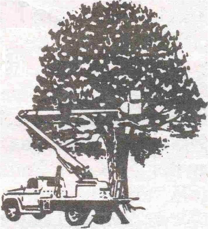 Tree Removal Cost and Pricing. Free tree service estimate