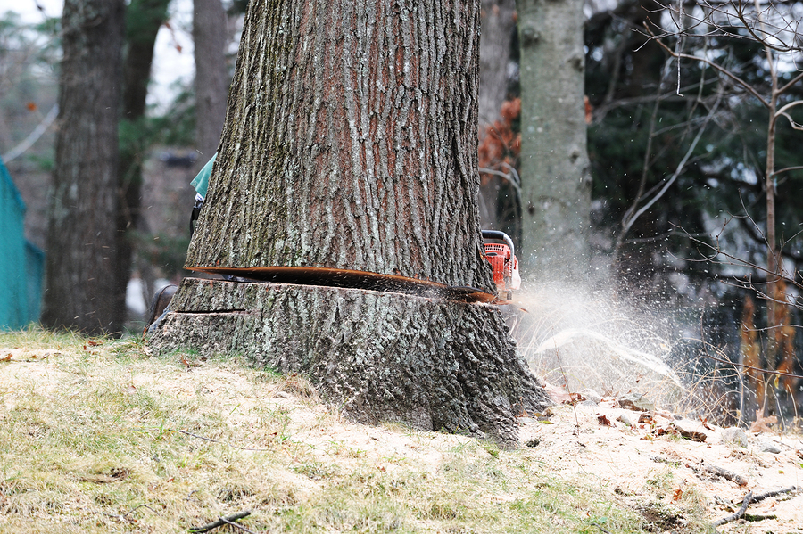 tree removal fort wayne