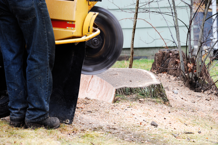 stump removal by grinding